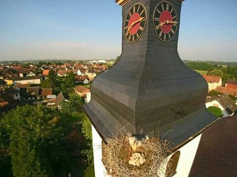 Nid de cigognes, Commune de Beinheim, Alsace.