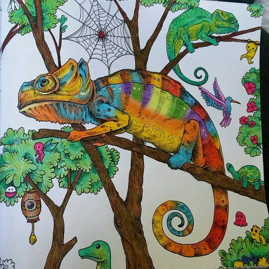 246 Best Reino Animal Ideias Images On Pinterest