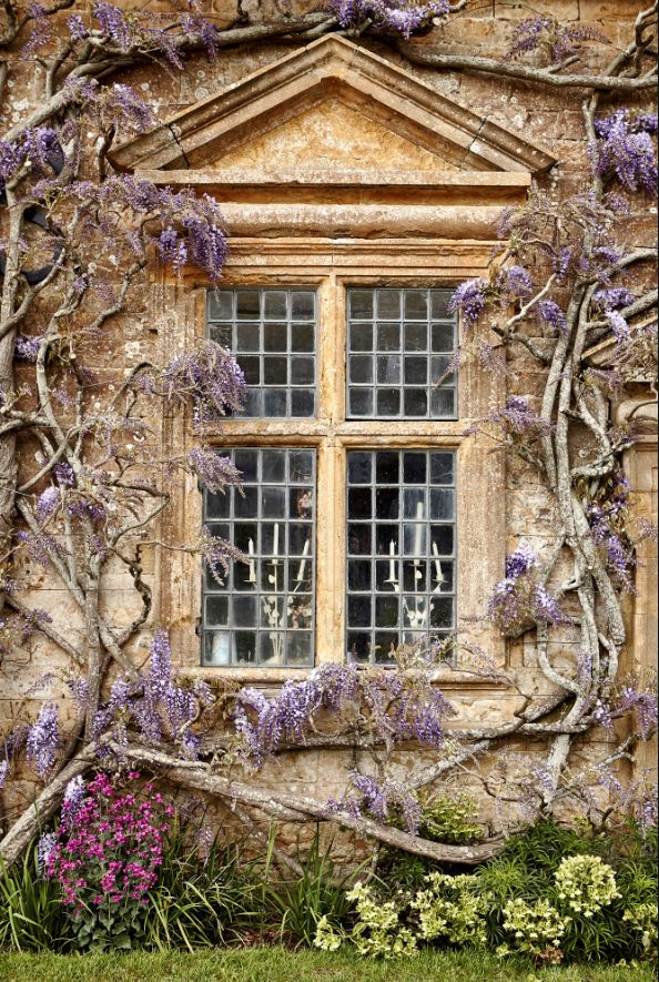 Wisteria-framed window at Mapperton Estate, where 'Far From the Madding Crowd' was filmed. Andy Haslam, The New York Times