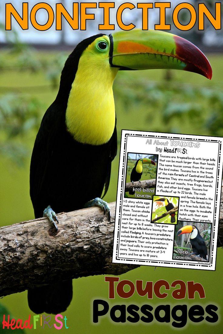 Close Reading Comprehension Passages And Questions On Toucans Rainforest Birds Fluency Passages Reading Comprehension Passages Close Reading Comprehension [ 1104 x 736 Pixel ]