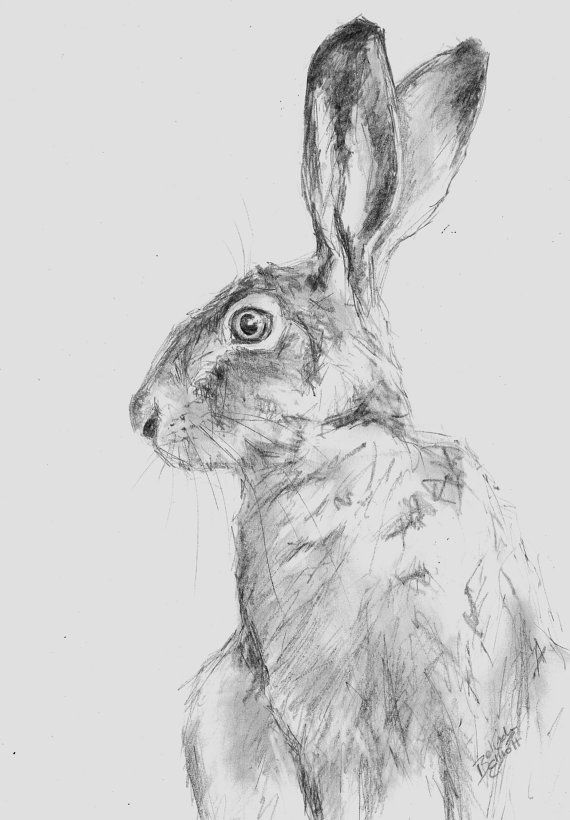 ORIGINAL A4 Pencil Wildlife Animal Drawing by BeeElliottAnimalArt, £15.00