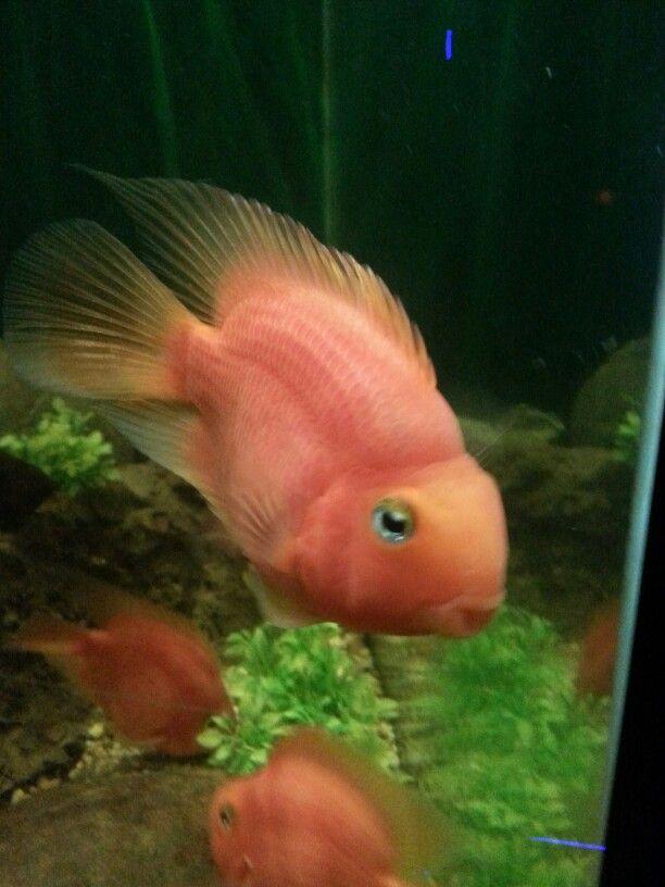 Fish with amazing eyes