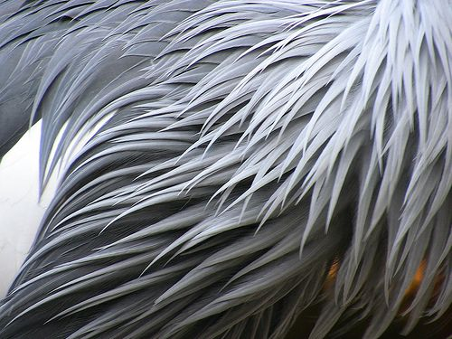17 Best images about closeup. feathers on Pinterest