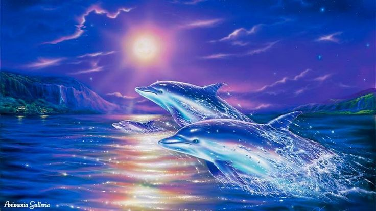 Fantasy Dolphins Pictures 22