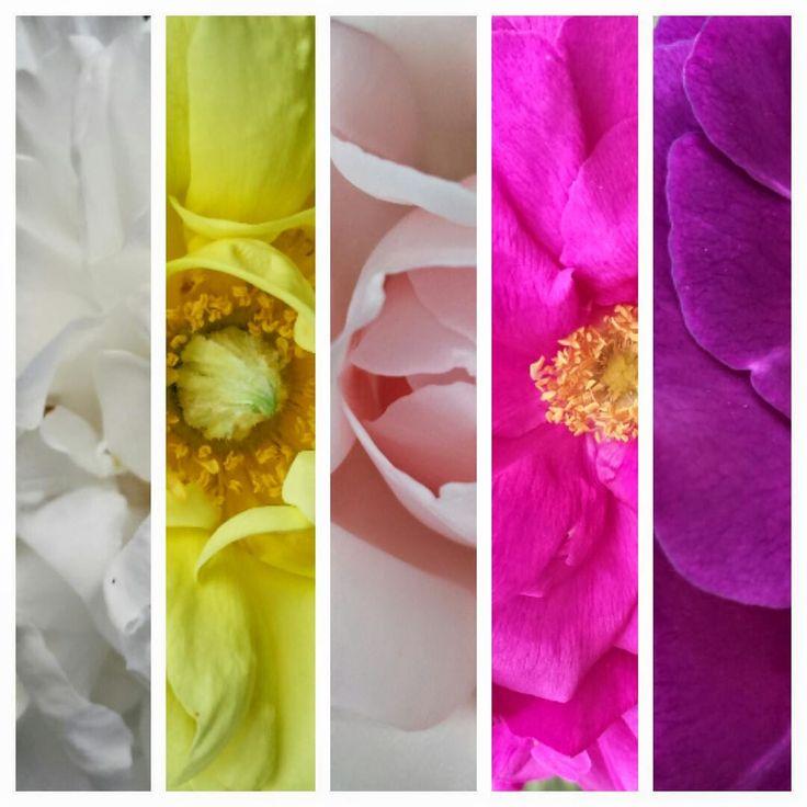 VÅRLI : Rosenes fargefest - Blommig Fredag