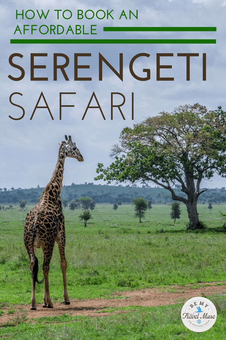 How to take a budget safari in the Serengeti, Tanzania, one of the world's top destinations for African safaris