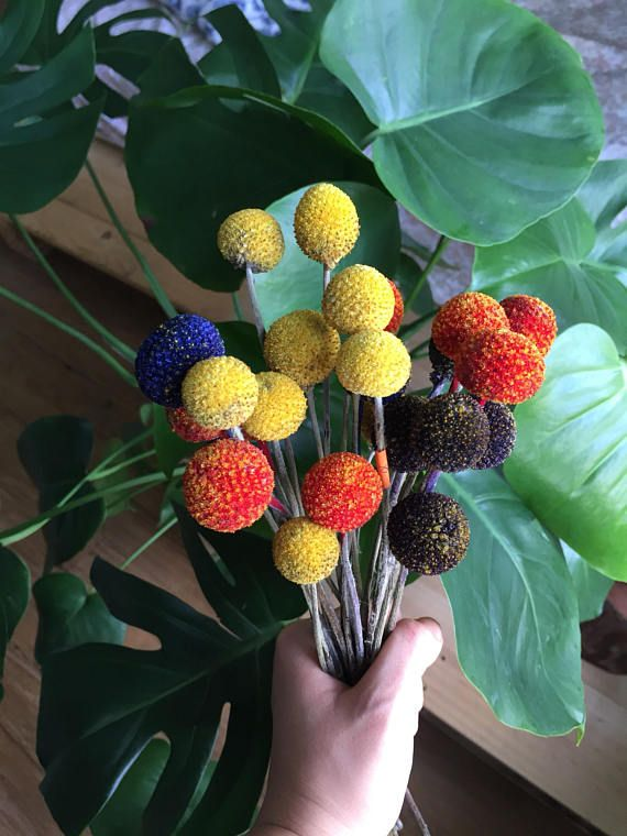 Dried Craspedia Bunch Of Various Colors Multicolor Billy Etsy Craspedia Billy Buttons Button Flowers