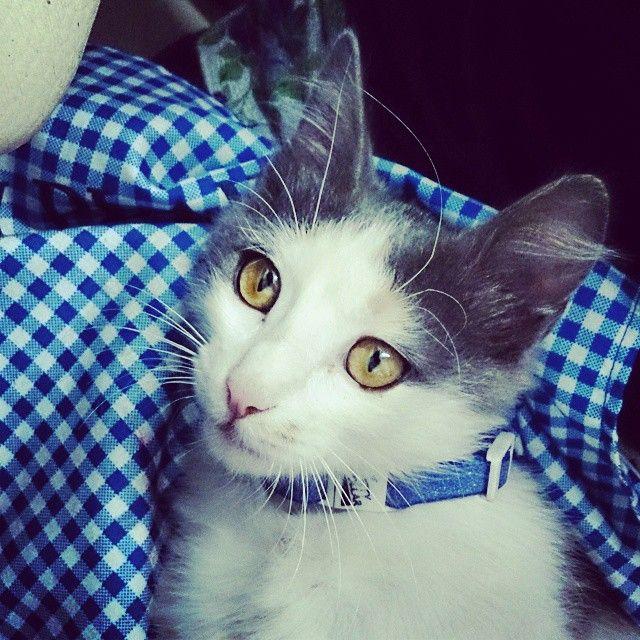 Meet #Indie, the Stories2Wear atelier #cat. She's a little wild beauty  <3