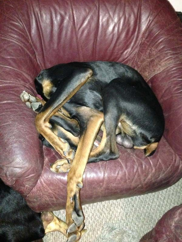 20 Hilarious Dogs That Forgot How to Dog