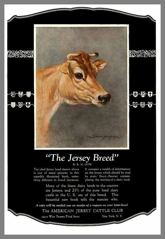 Vintage JERSEY Dairy Milk COW American Cattle by elevenvintage, $9.99