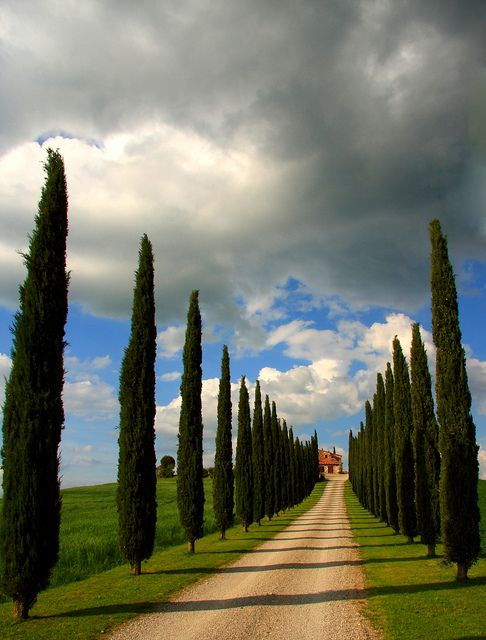"""Val d'Orcia, nuvole e geometrie di cipressi  """"The last goodbye"""" by Shahin & Sepehr"""