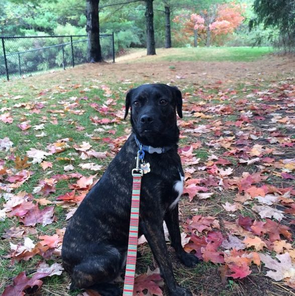 Enjoying the fall weather at Grass Island Dog Park - Greenwich, CT - Angus Off-Leash #dogs #puppies #cutedogs #dogparks #greenwich #connecticut #angusoffleash