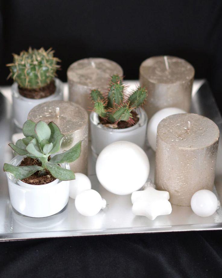 die besten 17 ideen zu kakteen und sukkulenten auf pinterest sukkulenten zimmer sukkulenten. Black Bedroom Furniture Sets. Home Design Ideas