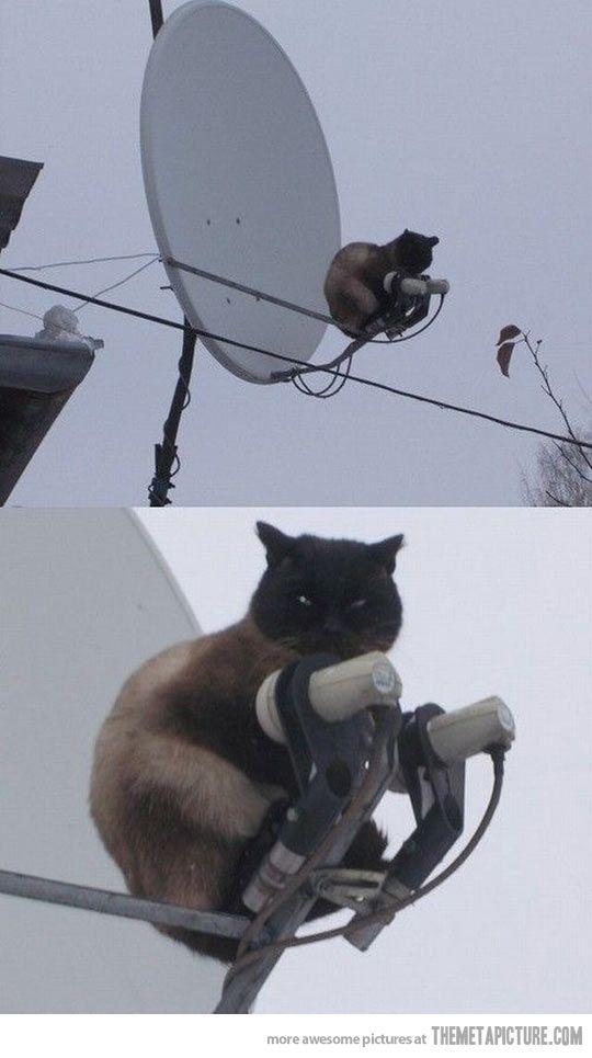 Surveillance cat is watching you… @Kaleigh Kessler