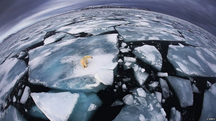 Wildlife Photographer of the Year winners - Ice matters (c) Anna Henly