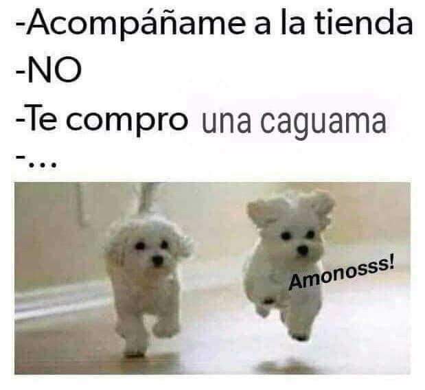 Pin By Adriana Robledo On Memes Really Funny Memes Memes Funny Memes
