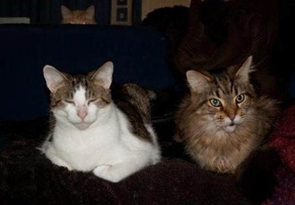 Cats just love to photobomb! {Did you catch the one peeking over the couch?!}