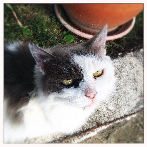 Foto Flashback agosto 2013 Micione pelosone della Casetta #cat #loveit #pets #micio