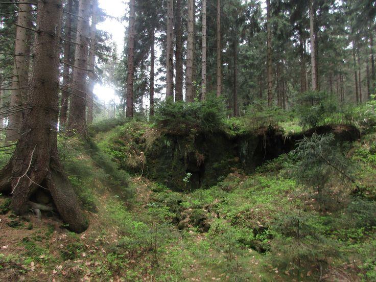 Les v Jedlové - Lužické hory - severní Čechy