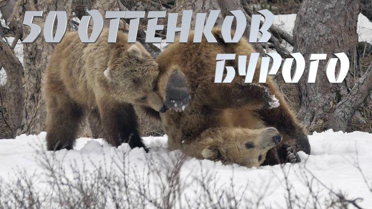 50 ОТТЕНКОВ БУРОГО. Часть 2. Казанова.