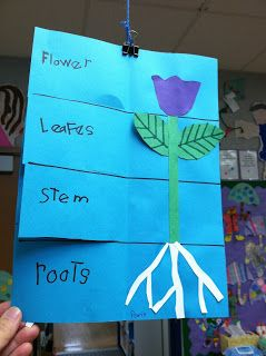 Kinder Learning Garden Blog: Plant Flip Book Modify for upper grades and have them list the jobs of each part for photosynthesis