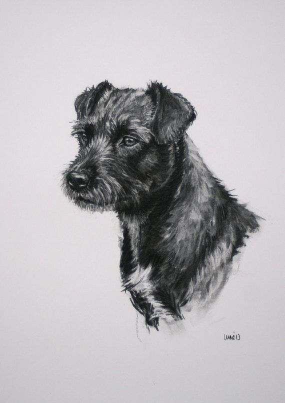 Patterdale Terrier dog fine art Limited Edition print by Terrierzs