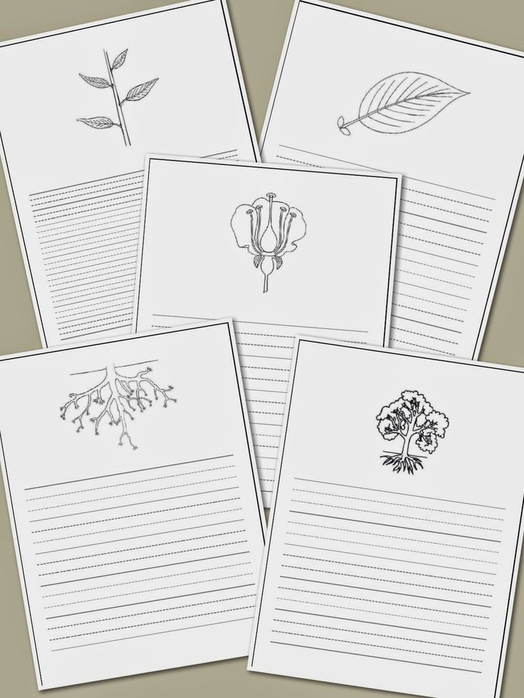 Elementary Observations: Resources - printable botany paper ALSO grammar and math printables. Corresponds with Montessori activities.