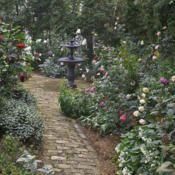 Take a walk through our rose gardens.: Rose Gardens, Flower Pots, Roses Garden, Photo, Walk