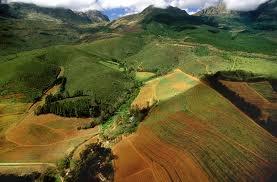 Vineyard, South Africa