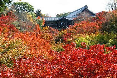 Tofukuji Temple•  Temple with spectacular autumn leaves.