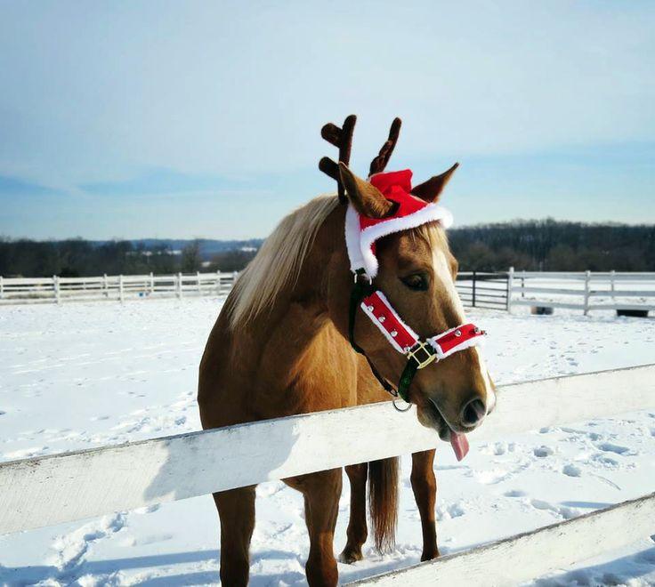 Santa Horse P