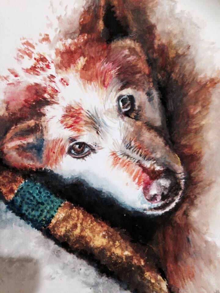 Red cattle dog- watercolour