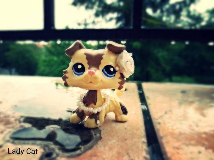 #Lps #collie #ladycat #kissalps