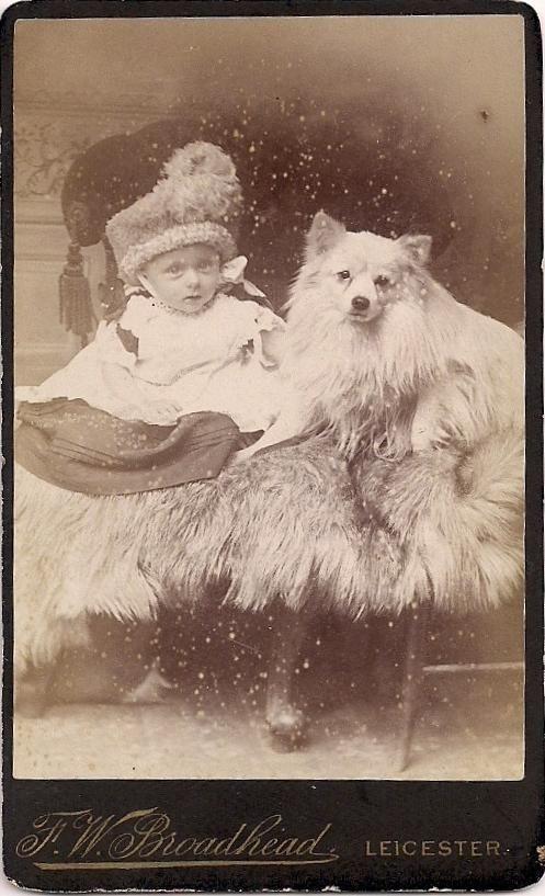 224 best american eskimo    german spitz images on pinterest