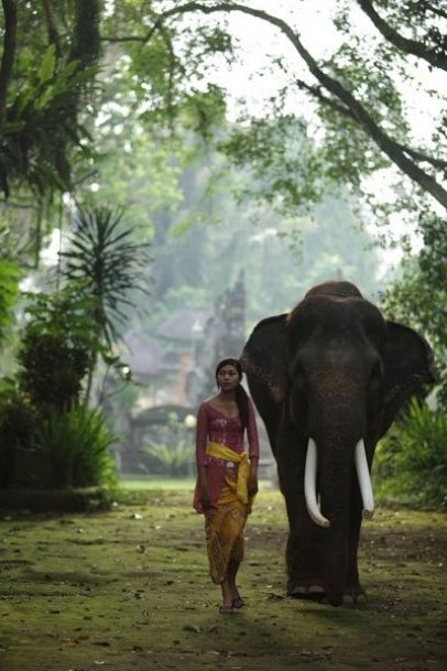 Elephant Safari Park - Bali