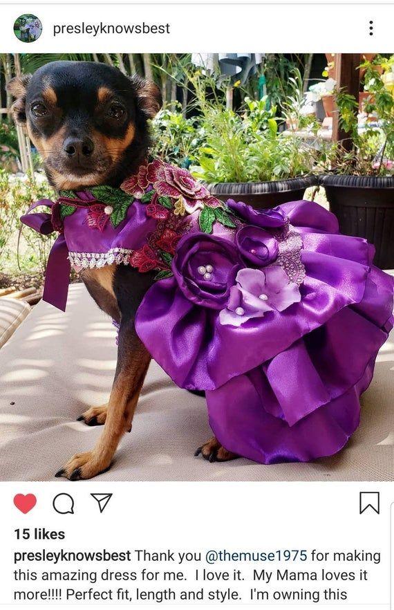 Welcome To The Muse Creations My New Line Of Luxury Pet Costume Dresses Like Us On Facebook Posh Pets Like Purple Dog Dress Dog Bridesmaid Dog Wedding Dress