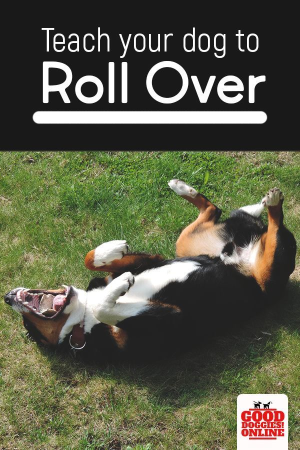 How To Teach Your Dog To Roll Over Dog Training Techniques Dog
