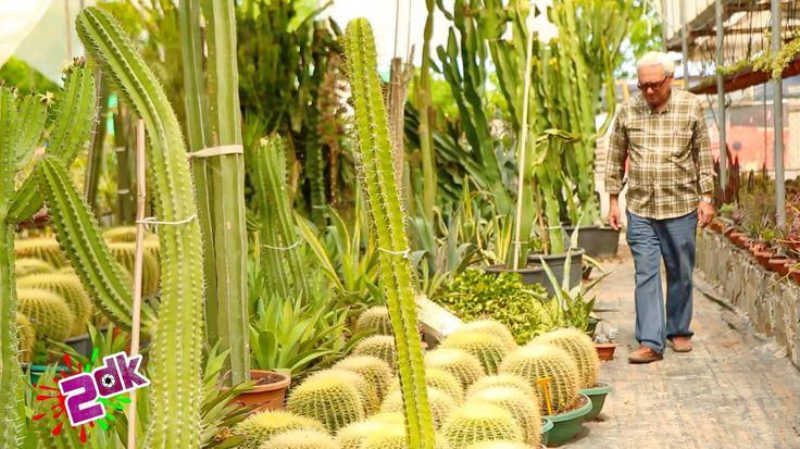 2dtv de 2dk da .. 40 yıllık bitkiler, Ünal Vural' ın kaktüs kolleksiyonu