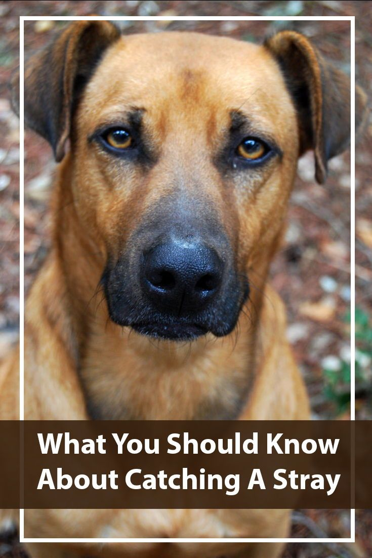 How To Catch A Stray Dog Training Your Dog Dogs Dog Names