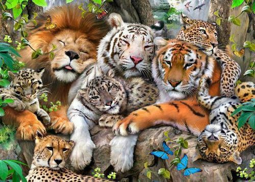 Wow All Big Felines Together Like You Never Seen Before
