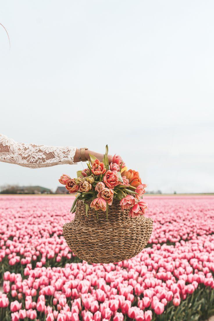 The Prettiest Tulip Fields In Holland In 2020 Tulip Fields