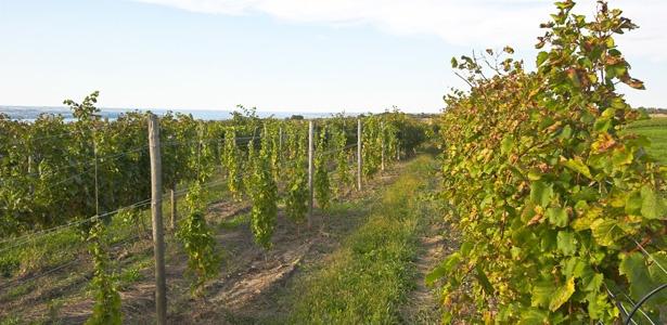 Finger Lakes wine on The Atlantic website.