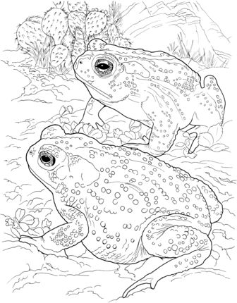 sonoran desert coloring pages - 125 best images about snake coloring pages kids on