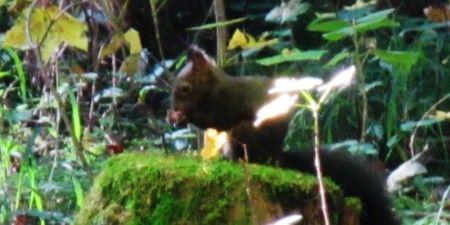 Eichhörnchenwald_Fischen