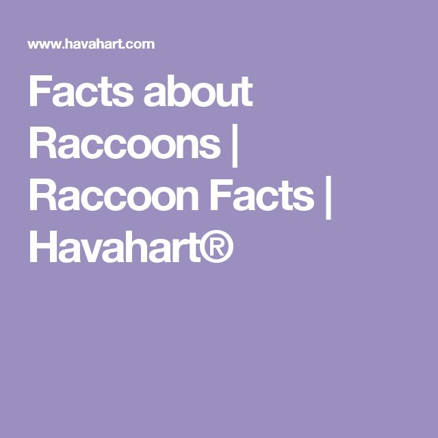 Facts about Raccoons | Raccoon Facts | Havahart®