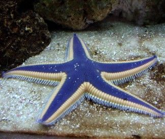 Very nice star fish