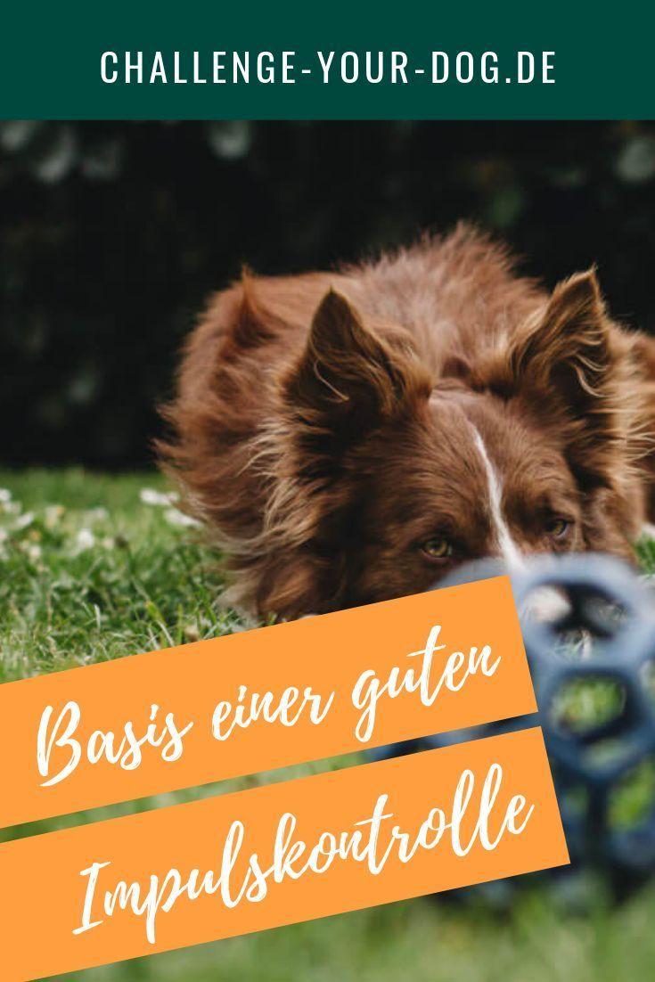 Die Basis Einer Guten Impulskontrolle Beim Hund Challenge Your Dog Hunde Hundetraining Hundchen Training