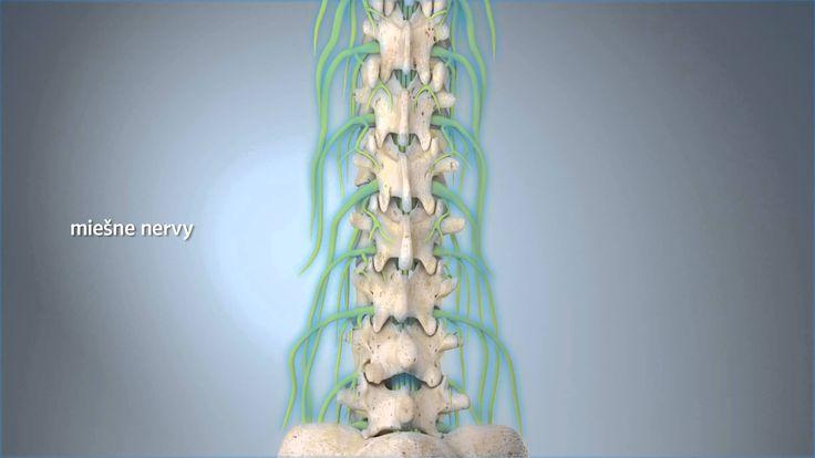 Blokáda miešneho nervu (SK verzia)
