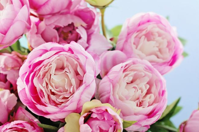 Love your peonies - but hate their short blooming season? This simple trick will have your peonies blooming all summer long.