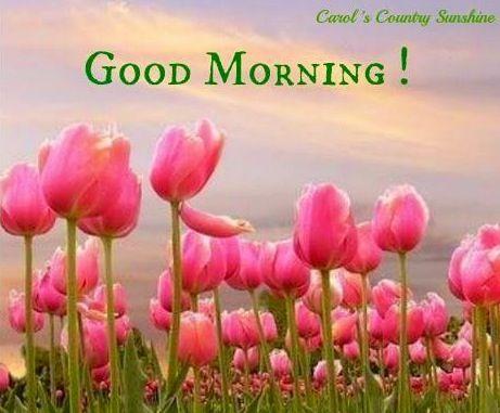 Good morning! via Carol's Country Sunshine on Facebook